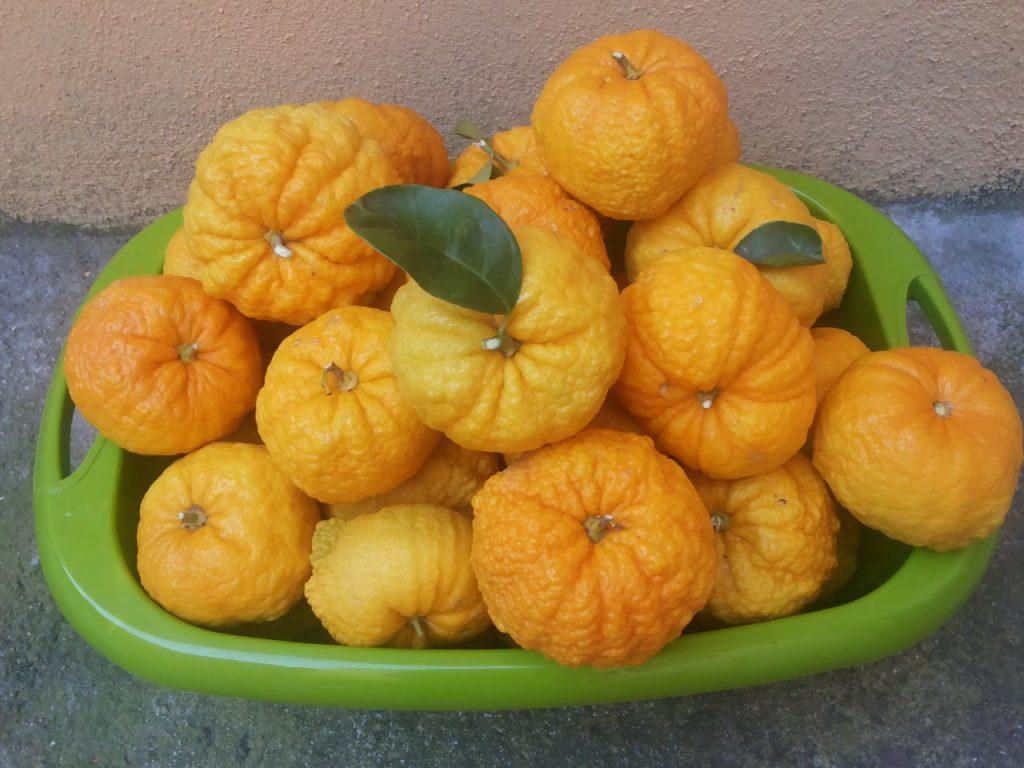 Il frutto autoctono della Pompia